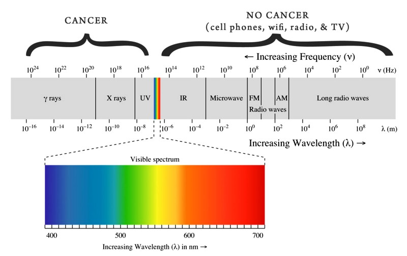 Cell phone causing cancer study